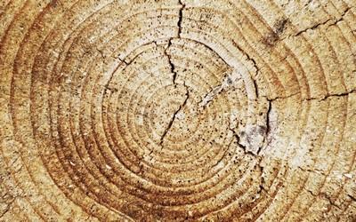 Кільця дерев