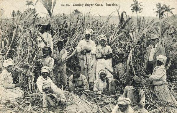 Сахарная плантация на Ямайке